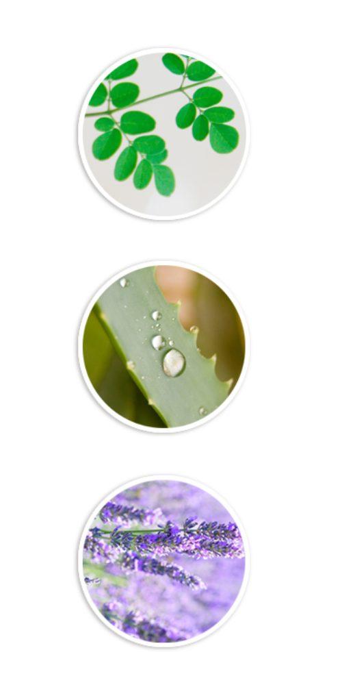лосьон CHOBS Moringa Lotion