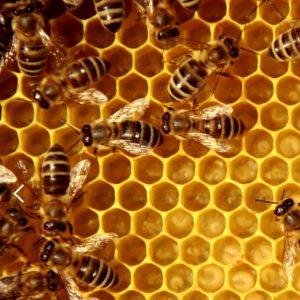 Bee Venom Cleansing Foam 6