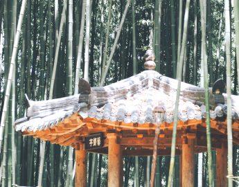 Бамбуковый лес в Дамъяне