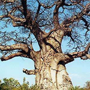 AFRICA BIRD HOMME ULTRA HARD WAX
