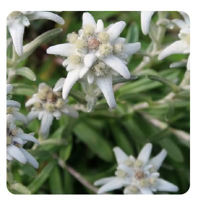 flowercellmask4